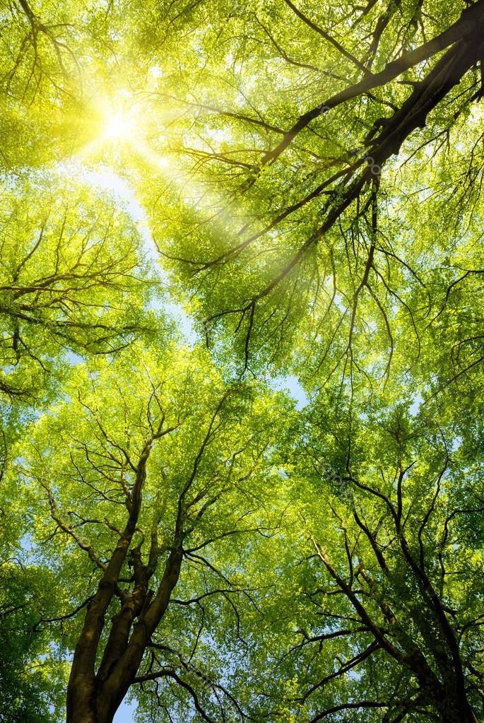 depositphotos_20087195-stock-photo-sun-shining-through-treetops